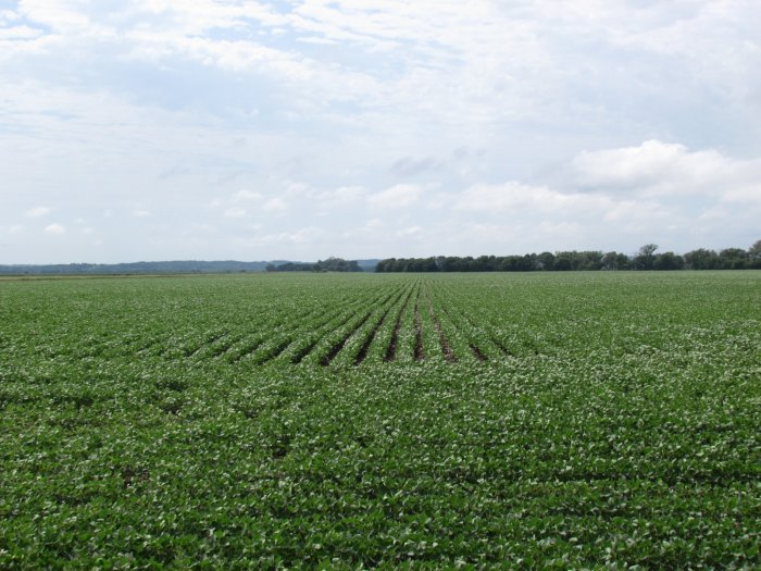 Land Auction - 164.06 Acres in Lincoln Township, Monona County, Iowa