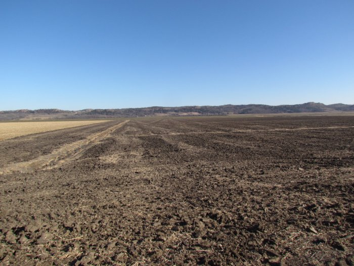 Tract One: Middle of Farm looking east